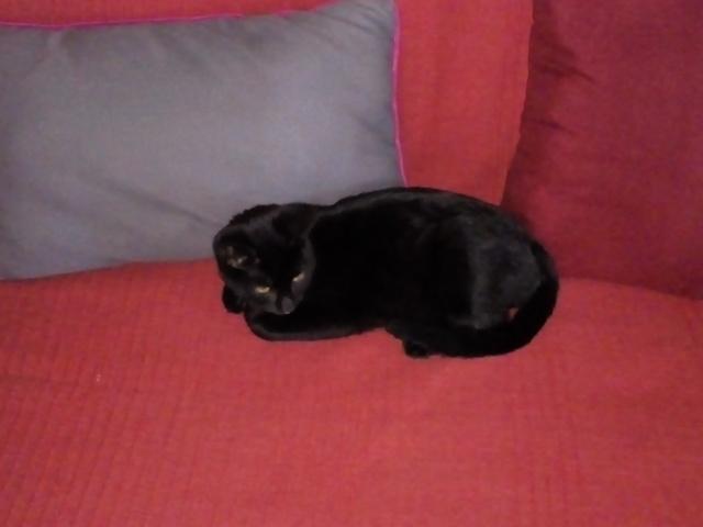 Sonako, chaton Gouttière