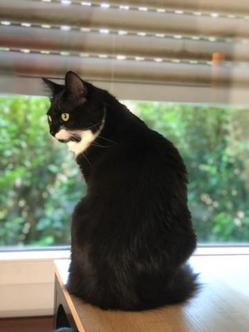 Spirit, chaton Gouttière