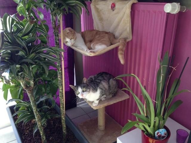 Tao Et Cloé, chat Gouttière