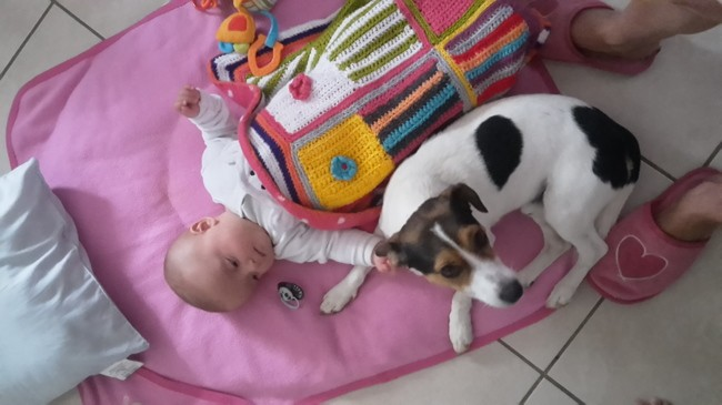 Tchoupi, chien Jack Russell Terrier