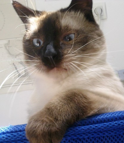 Django, chat Thaï
