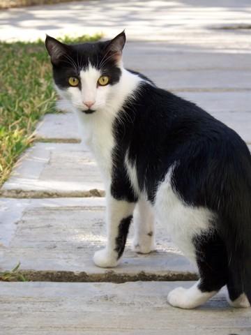 Théoo, chat