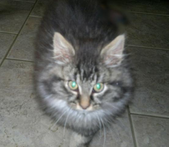 Plumeau, chaton