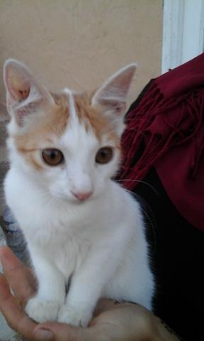 Tirebouchon, chat