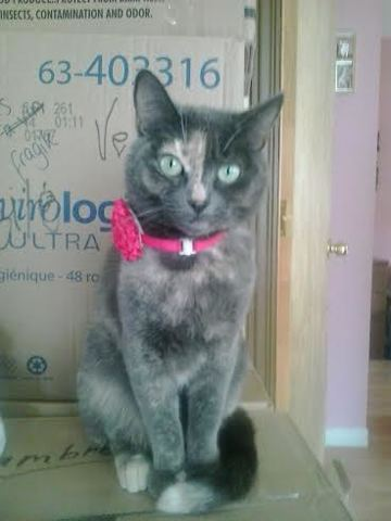 Toutoune, chat Gouttière