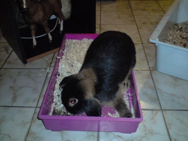 Euhhh! Sa c'est pas ma cage?!...