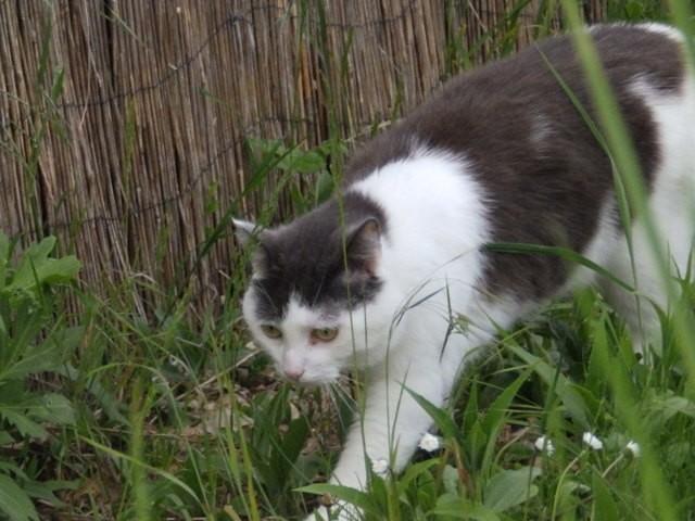Tweeny, chat Gouttière