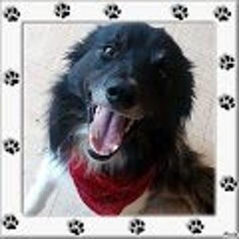 Twister, chien Border Collie