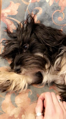 Ursula, chien