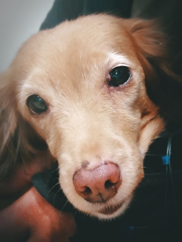 Uzy, chien