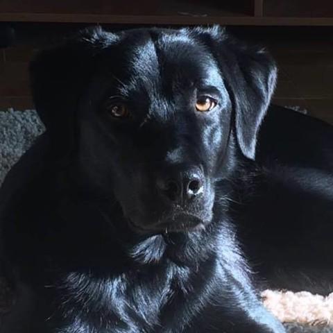 Vacqueyras, chien