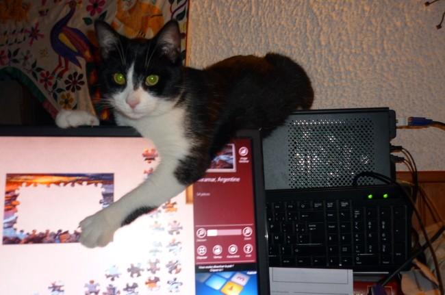 Vagabond, chaton Gouttière