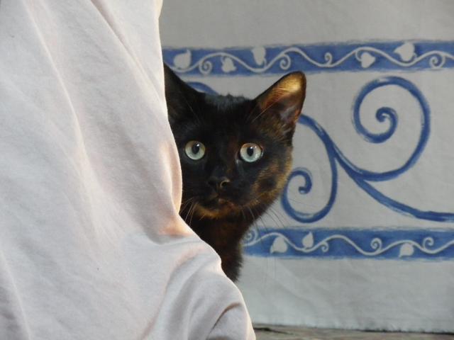 Vito, chat