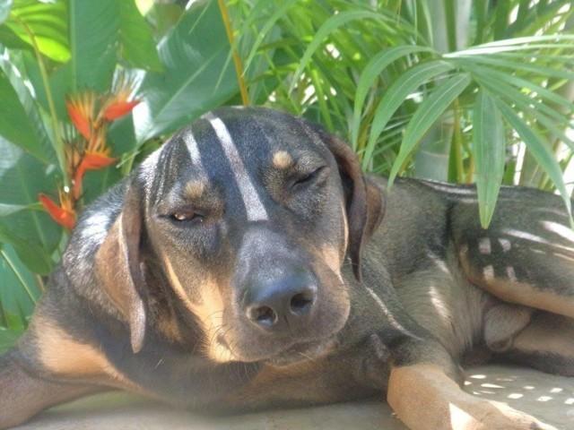 Willfred, chien