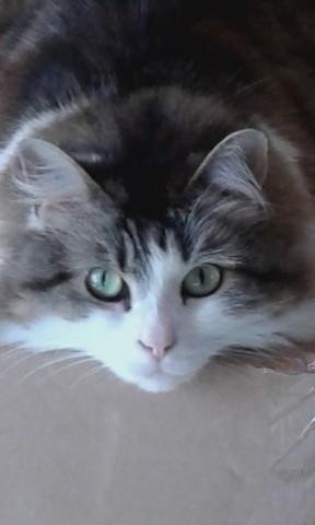 Winny, chat Gouttière