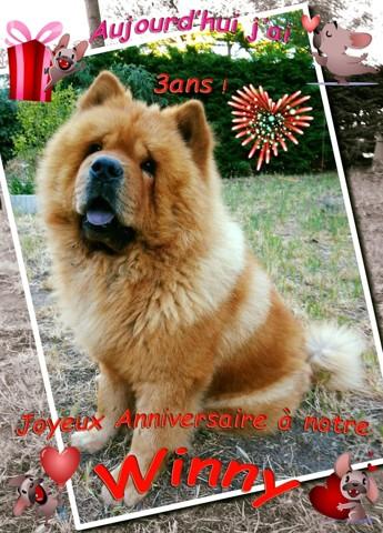 Winny, chien Chow-Chow