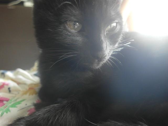 Xena, chaton