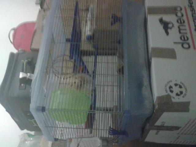 Xiumin, rongeur Hamster