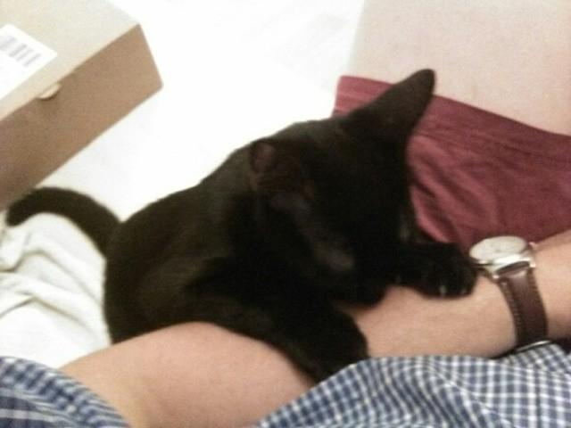 Zaire, chaton