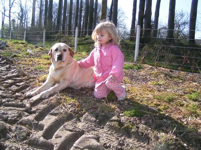 Zico, chien Labrador Retriever