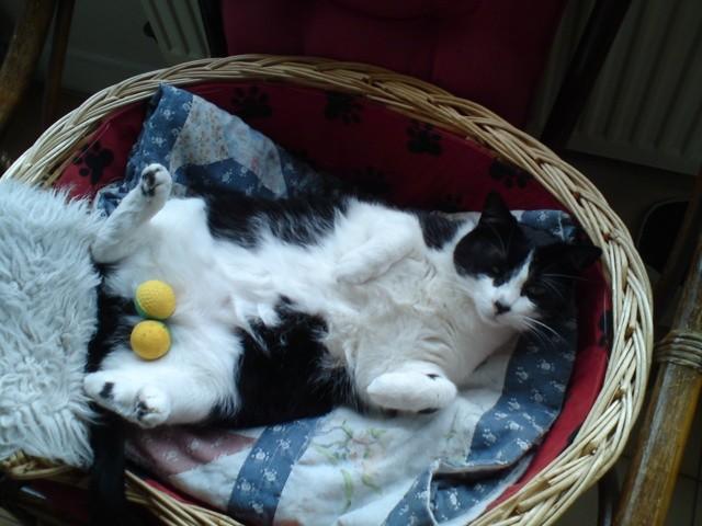 Zizou, chat Gouttière