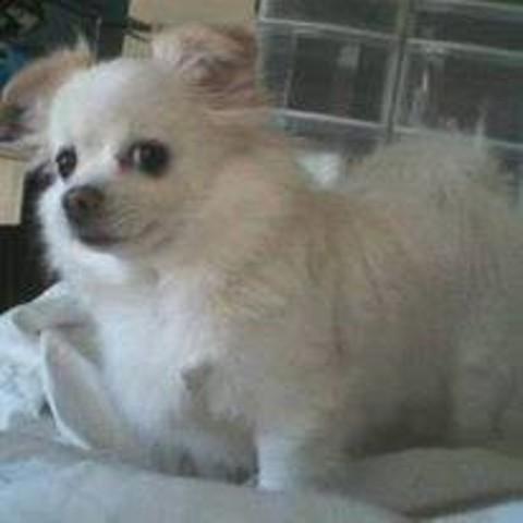 Zoukiny, chien