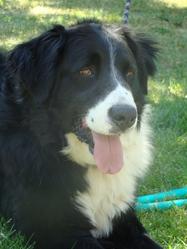 Daiko, chien