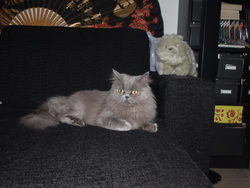 Earwen, chat