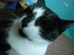 Sixtee, chat Gouttière
