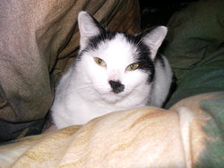 Blanche-Neige, chat