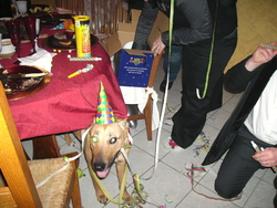 Bahia, chien Berger belge