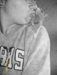Gryzouil, rongeur Rat