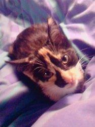 Ganja, chat Gouttière