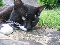 Porto, chat Gouttière