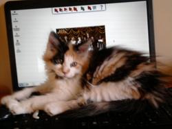 Kenza, chat Gouttière