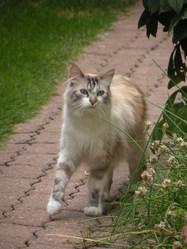 Coocky, chat Gouttière