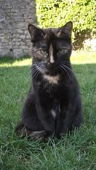 Shoo, chat Gouttière