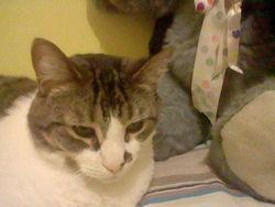 Cleyd, chat Gouttière