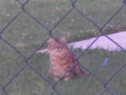 Nani, chat Gouttière