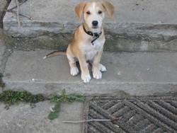 Paco, chien