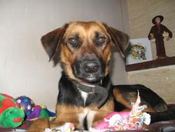 Letchi, chien