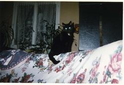 Jacinthe, chat Gouttière
