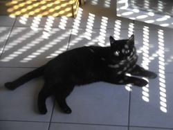 Paschat, chat Gouttière