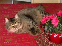 Prune, chat Gouttière