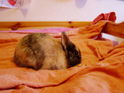 Biscuit Mort, rongeur Lapin