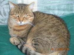 Caramel, chat Gouttière