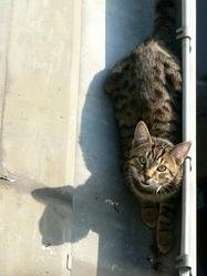 Mouta, chat Gouttière