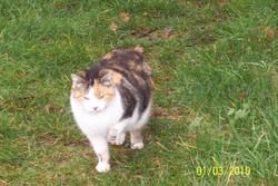 Gourmandine, chat Gouttière