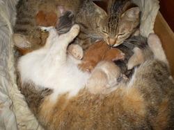 Doby, chat Gouttière
