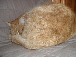 Nouna, chat Gouttière